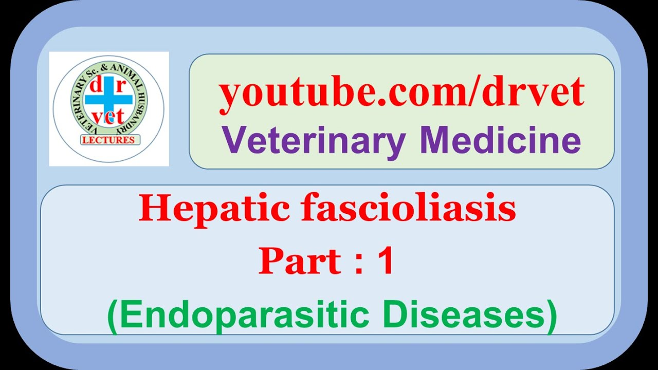 a fascioliasis patogenezisében