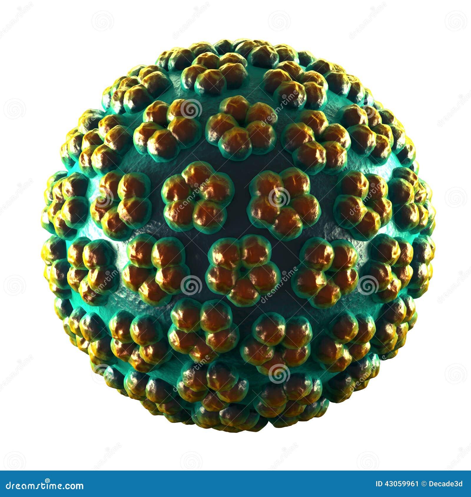 papilloma vírus com)
