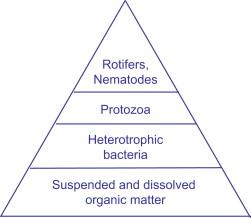 sisak protozoa
