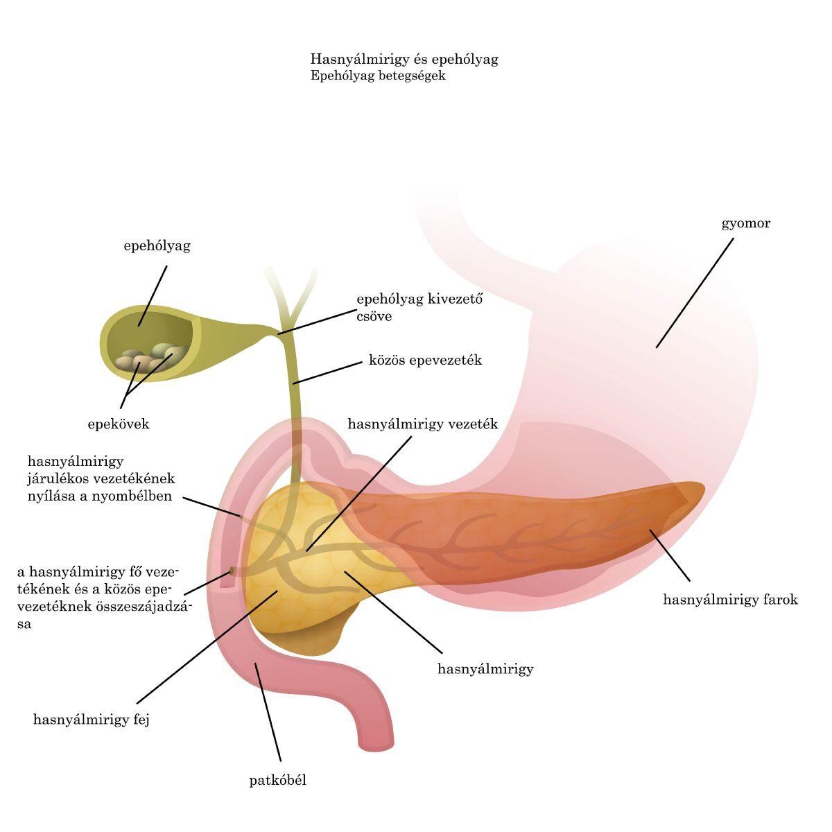 az epeúti férgek tünetei
