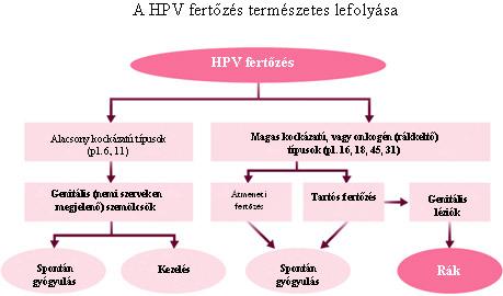 hpv magas kockázatú fertőzés