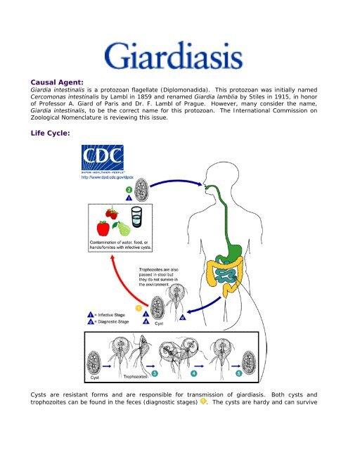 protozoon kezelés a giardia ellen)