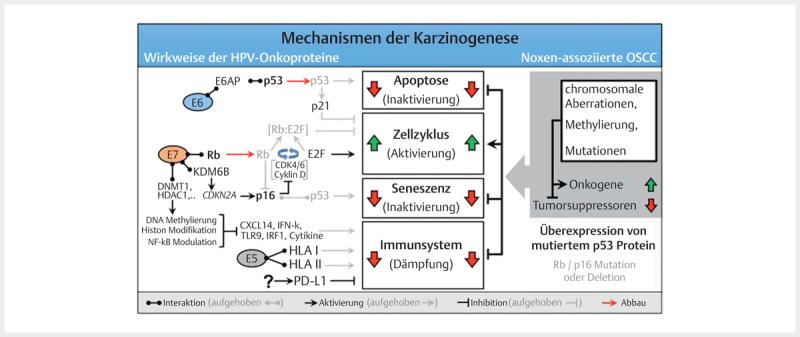 papillomavírus 16 onkoprotein