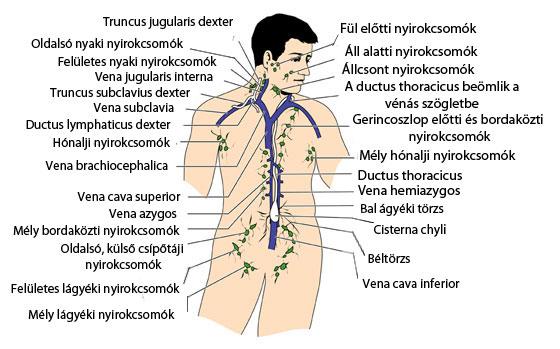 áttétes rák nyaki csomó)