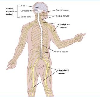 a gerincrák okai hofigal természetes méregtelenítő komplex vélemények