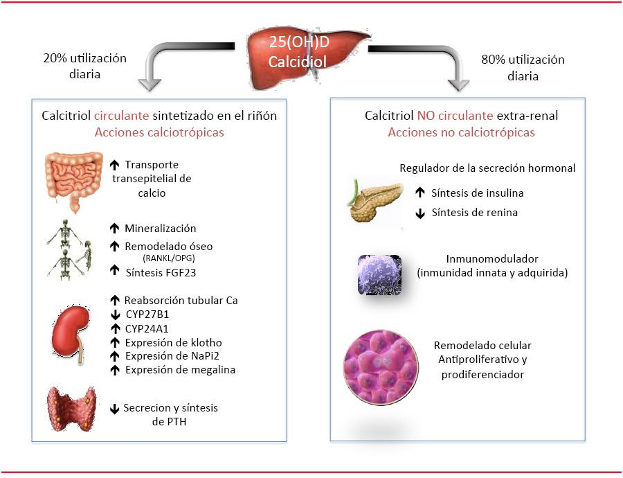 A gyógyulási esély összefügg a D-vitamin-szinttel