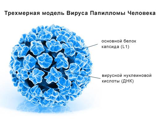 hpv vírus kb)