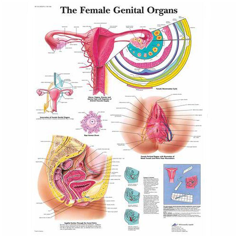 nők papillómái a nemi szervek kezelésében)