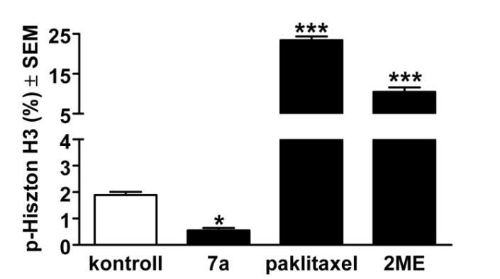 papillomavírus hím inkubációja