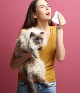 gyomorrák macska