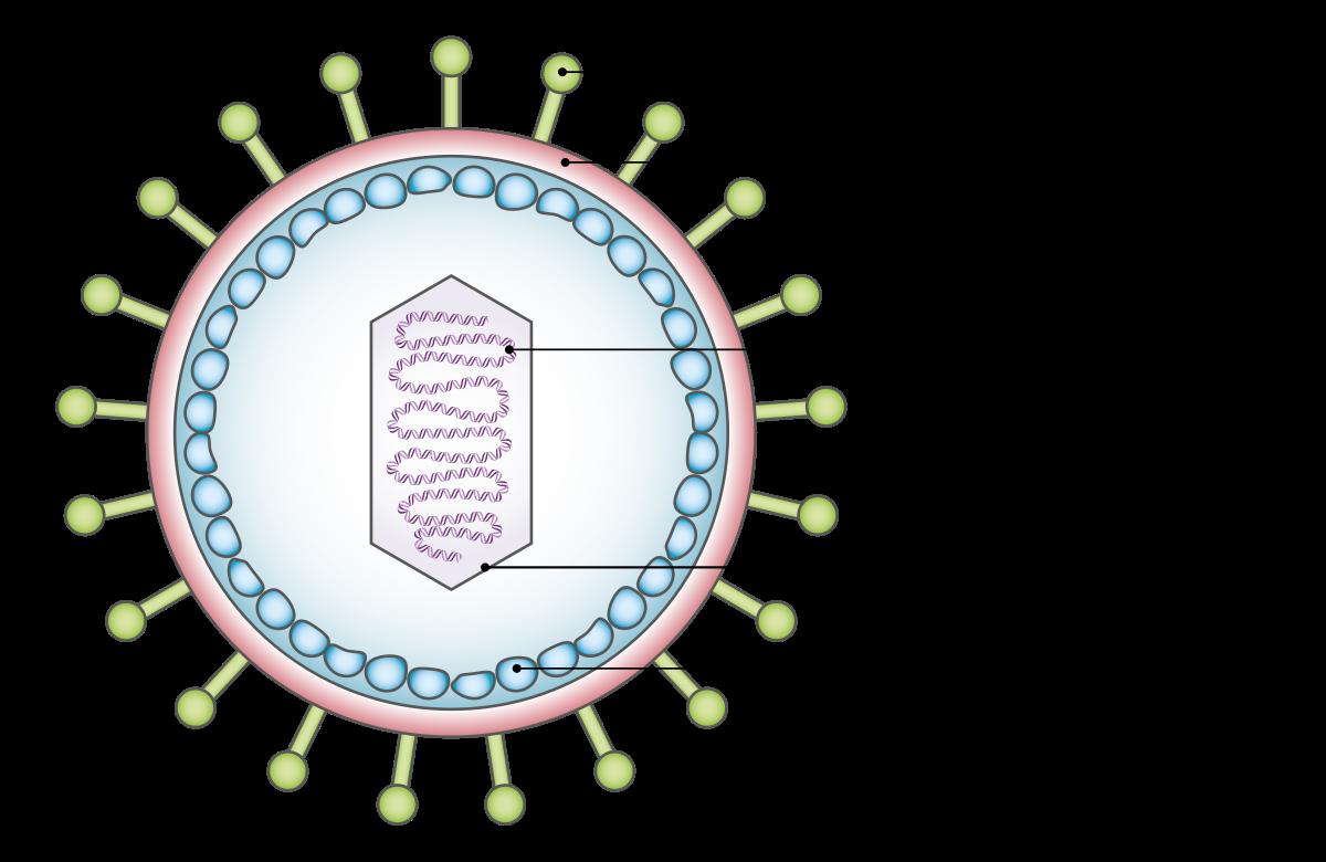 alfa papillomavírusok körömférgekkel járó kiütés