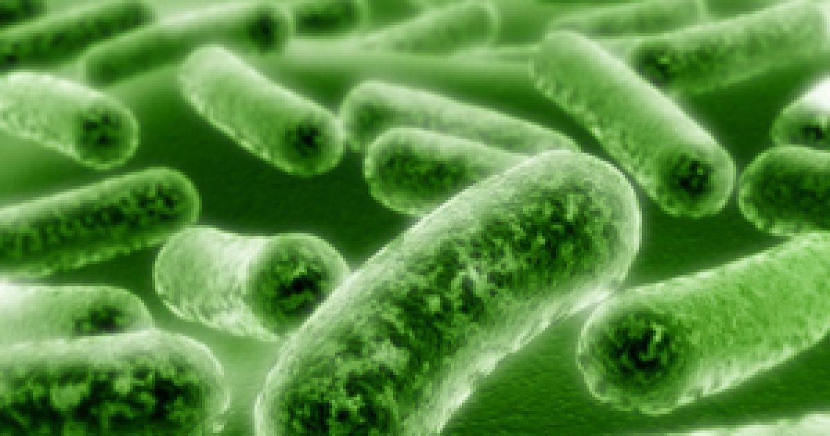 """A baktériumok nem mindig """"rossz fiúk"""""""