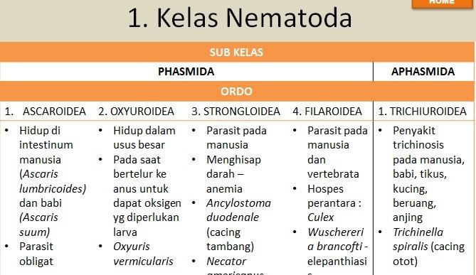 nemathelminthes kelas perbedaan