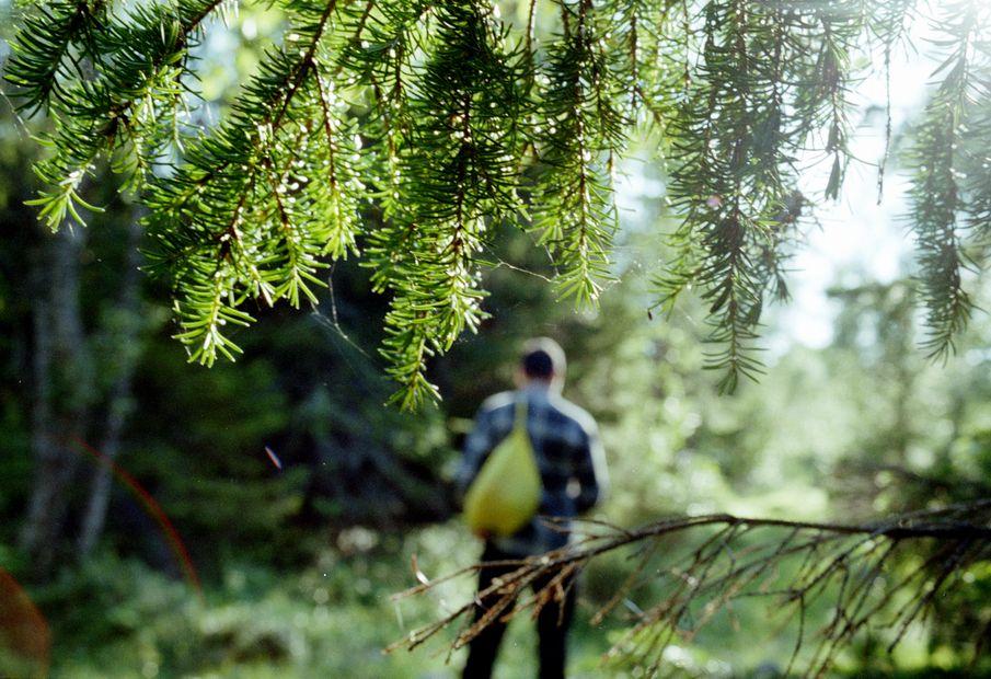 KÉKTÚRA HONLAP - Mit tegyünk, ha eltévedtünk az erdőben?