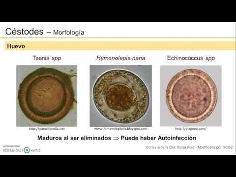 a helmint fertőzések terjedési tényezője)