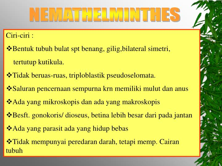 nemathelminthes ppt)