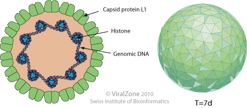 Kombinált diagnosztikai teszt a humán papillomavírus kimutatására