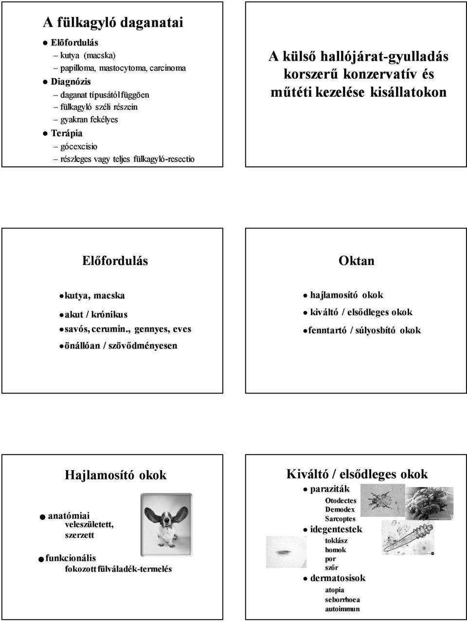 papilloma paraziták kezelése