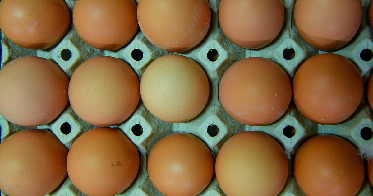 tojás baktériumok)