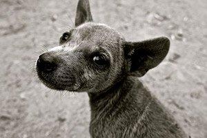 Chronische giardia bij honden - Giardia - wat is het? milyen betegségek okozzák a helmintákat