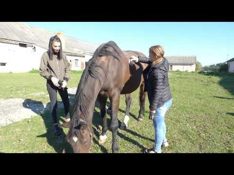 a helmintákkal történő kezelés módszerei