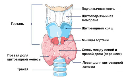gége pikkelyes papilloma patológia)