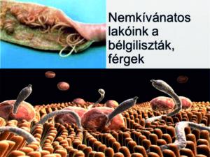 a paraziták hatékony kezelése emberben