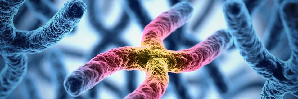 vastagbélrák genetikai kapcsolat)
