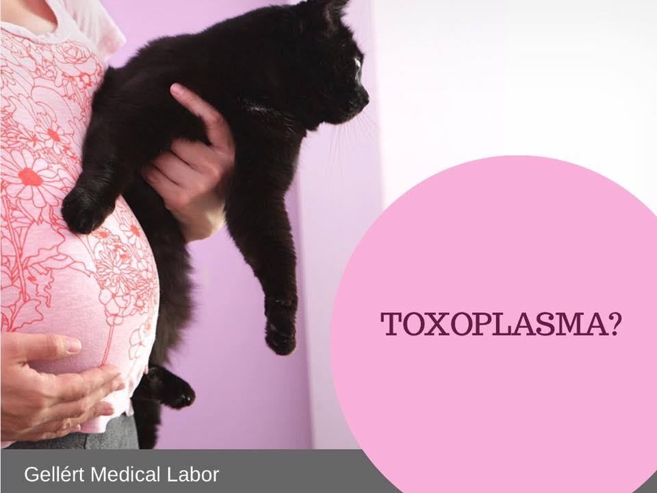 negatív toxoplazma terhesség alatt