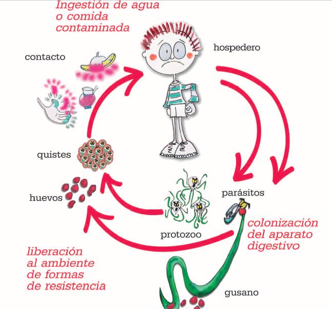 Giardia verme sintomas