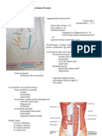 maxilláris ductalis papilloma