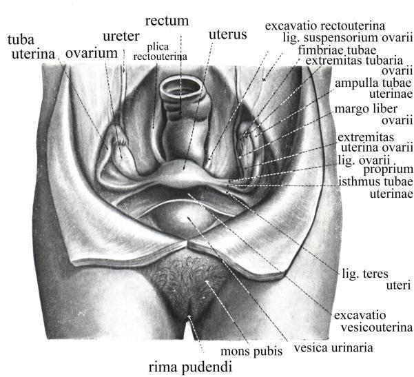 rezorcinol a genitális szemölcsök ellen)