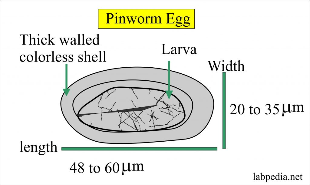 enterobius vermicularis kezelés csecsemőknél