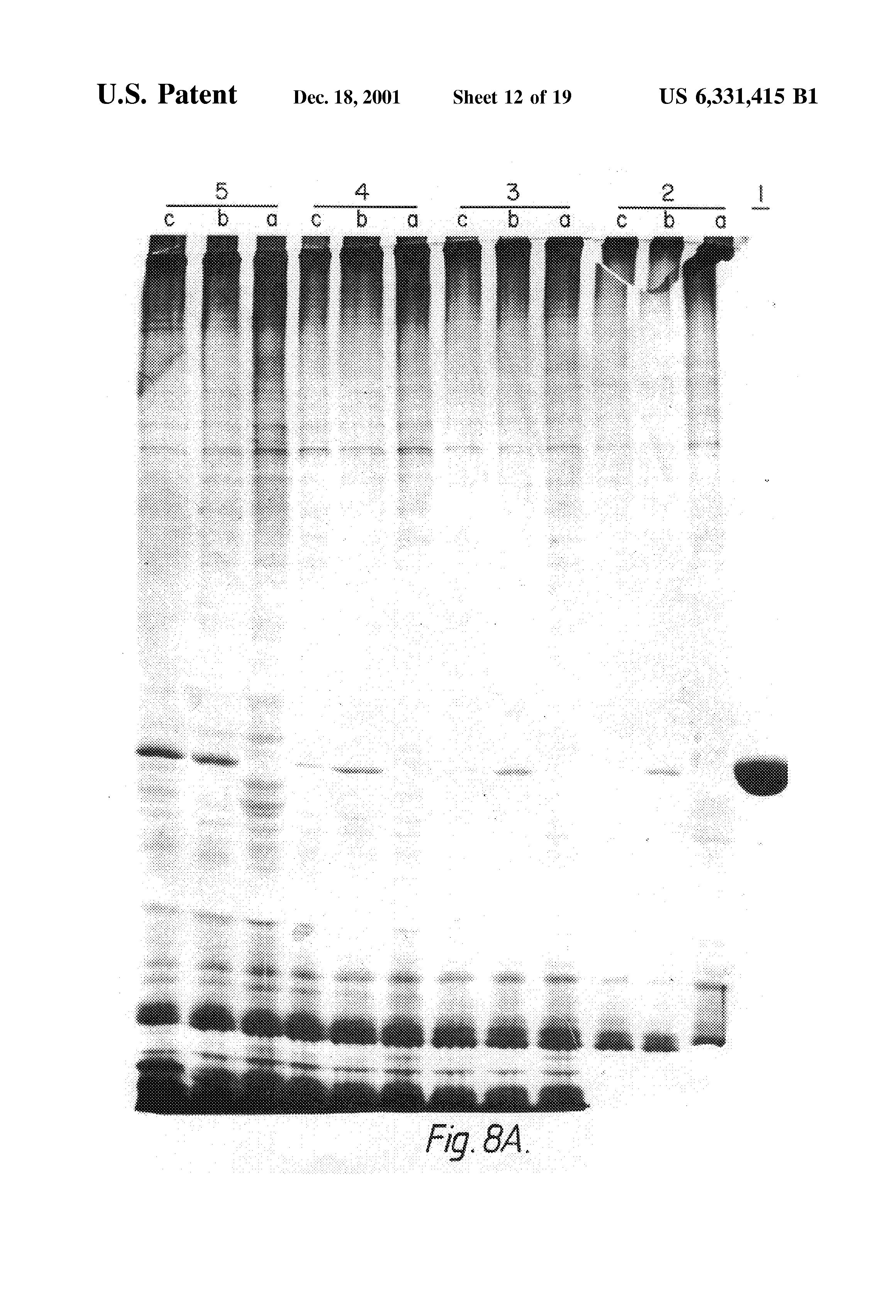 petefészekrák nz