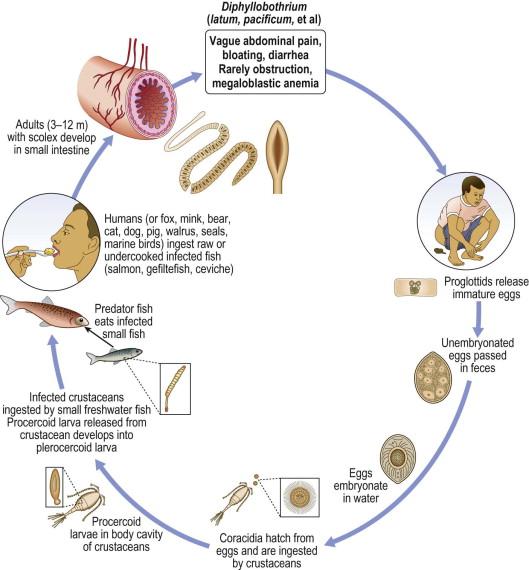helmintikus kezelési rendek)