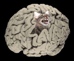 gyomorrák macska)