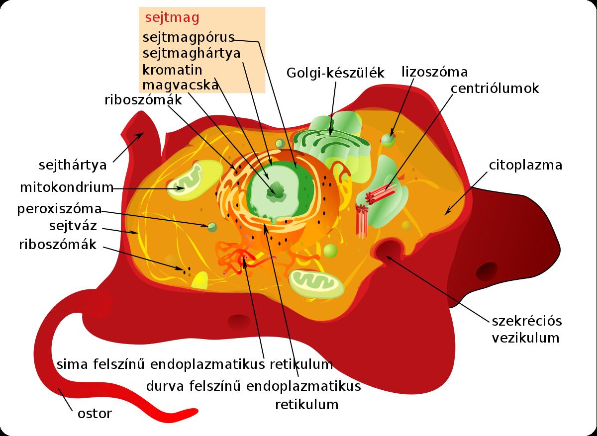 a baktériumok sejtszerkezete