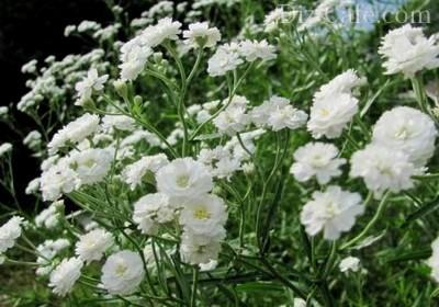 Mitől lesz fehér a virágföld?