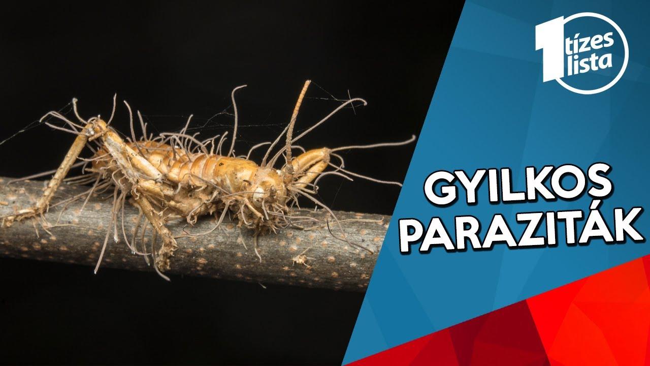 milyen paraziták élnek az emberben