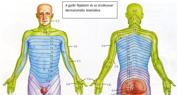 az emberi ostorcsapás tünetei gyógyítja a magas kockázatú hpv-t