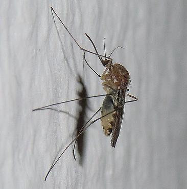 Természetes rovarriasztók házilag