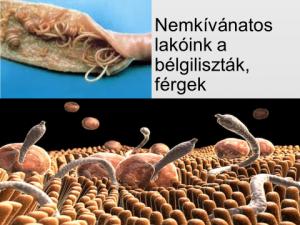 Férgek kezelése felnőtteknél a gyógyszerek széles skálája, Milyen paraziták elhetnek egy emberben