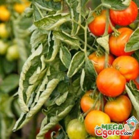 Kertészeti növénykórtan | Digitális Tankönyvtár