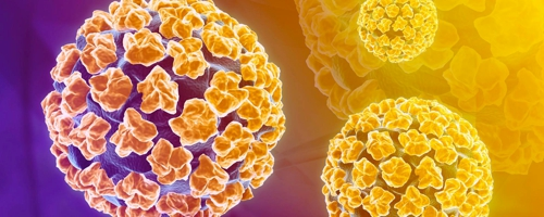 hpv vírus a prenasa