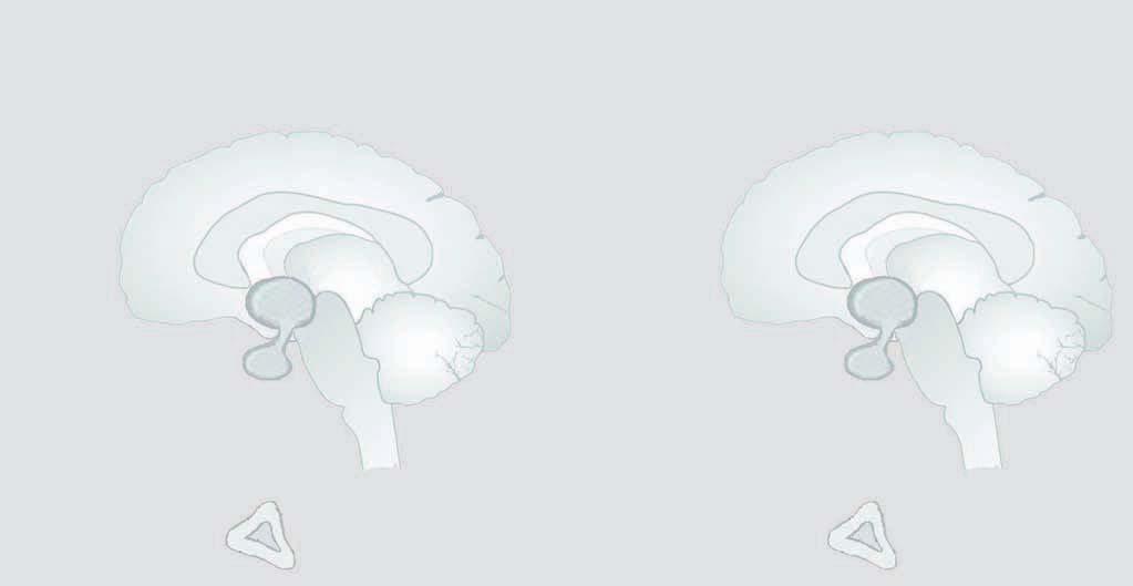 Dal vagyok a fejedben egy parazita - Más Dimenziók - Ascaris emberi dimenziók