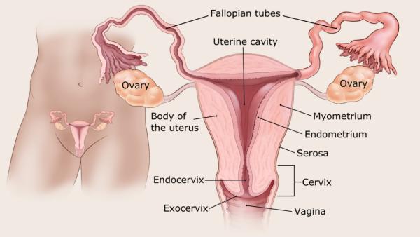 endometrium rákos vérzés mintázata)