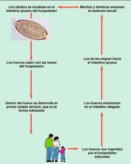 parazita enterobiosis)