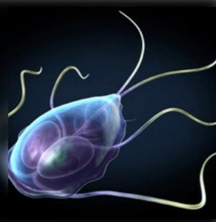 nők húgyhólyagrák tünetei hpv szemölcsök vs rák