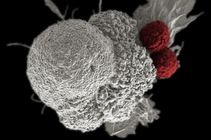 hasi rákos időszak