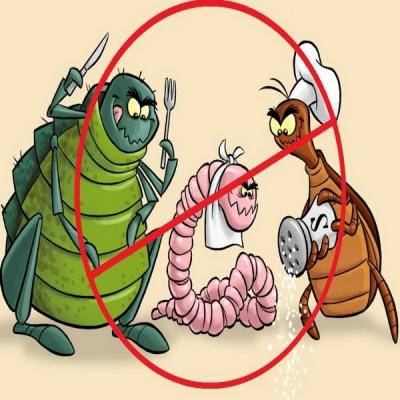 Kako leciti paraziták és crevima - Tabletta az emberi test parazita ellen